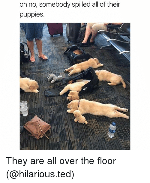 floored: oh no, somebody spilled all of their  puppies. They are all over the floor (@hilarious.ted)