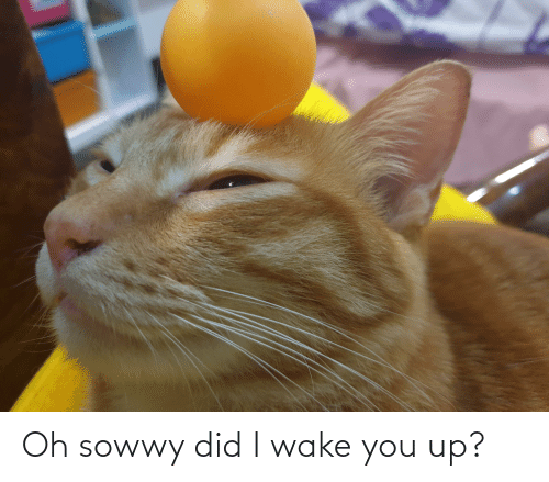 You Up: Oh sowwy did I wake you up?