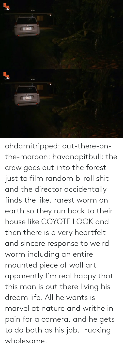 Nature: ohdarnitripped:  out-there-on-the-maroon:  havanapitbull: the crew goes out into the forest just to film random b-roll shit and the director accidentally finds the like..rarest worm on earth so they run back to their house like COYOTE LOOK and then there is a very heartfelt and sincere response to weird worm including an entire mounted piece of wall art apparently I'm real happy that this man is out there living his dream life. All he wants is marvel at nature and writhe in pain for a camera, and he gets to do both as his job.    Fucking wholesome.