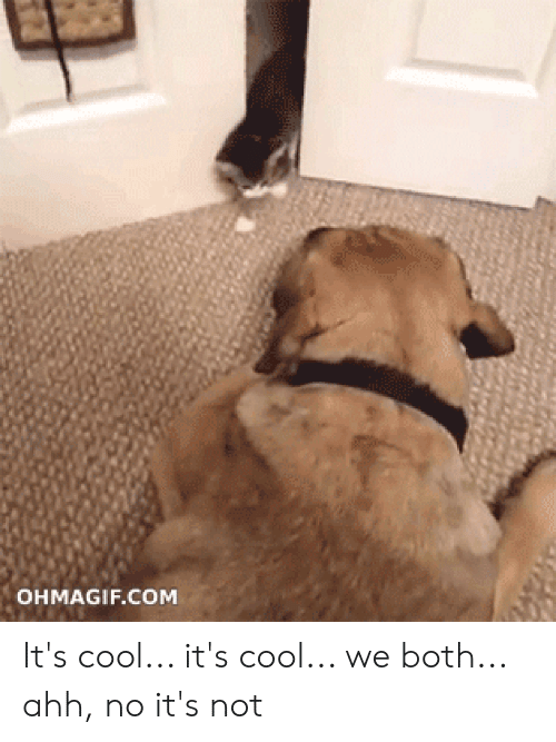 Ohmagif: OHMAGIF.COM It's cool... it's cool... we both... ahh, no it's not