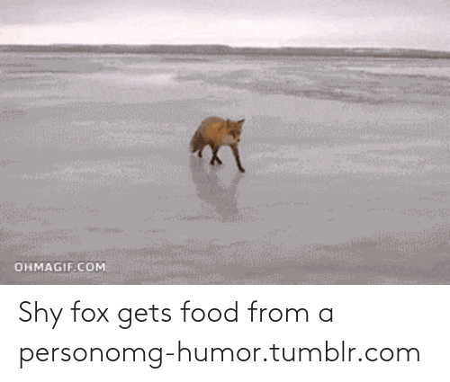 Ohmagif: OHMAGIF.COM Shy fox gets food from a personomg-humor.tumblr.com