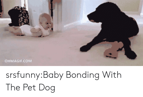 Ohmagif: OHMAGIF.COM srsfunny:Baby Bonding With The Pet Dog