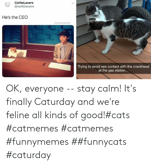 feline: OK, everyone -- stay calm! It's finally Caturday and we're feline all kinds of good!#cats #catmemes #catmemes #funnymemes ##funnycats #caturday