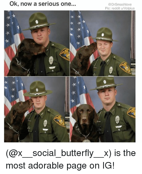 Memes, Reddit, and Butterfly: Ok, now a serious one.  @DrSmashlove  Pic: reddit u/Volpius (@x__social_butterfly__x) is the most adorable page on IG!