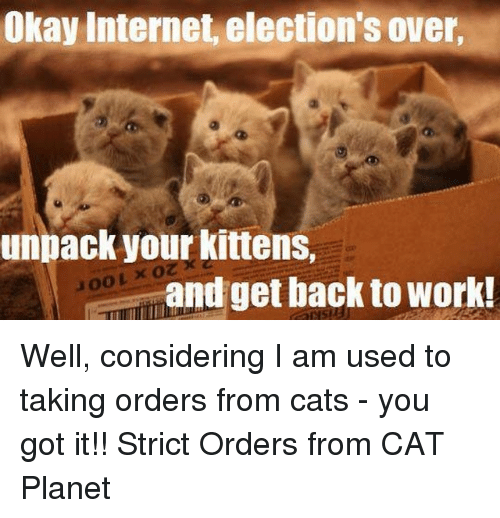 Internet, Memes, and Work: Okay Internet, election's over,  unpack your kittens,  o  OOL and get back to work! Well, considering I am used to taking orders from cats -  you got it!!  Strict Orders from CAT Planet