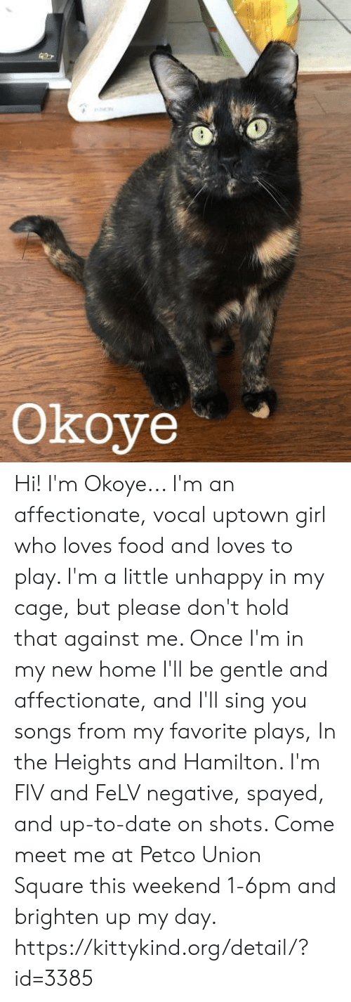 in the heights: Okoye Hi! I'm Okoye...  I'm an affectionate, vocal uptown girl who loves food and loves to play. I'm a little unhappy in my cage, but please don't hold that against me. Once I'm in my new home I'll be gentle and affectionate, and I'll sing you songs from my favorite plays, In the Heights and Hamilton. I'm FIV and FeLV negative, spayed, and up-to-date on shots. Come meet me at Petco Union Square this weekend 1-6pm and brighten up my day.  https://kittykind.org/detail/?id=3385