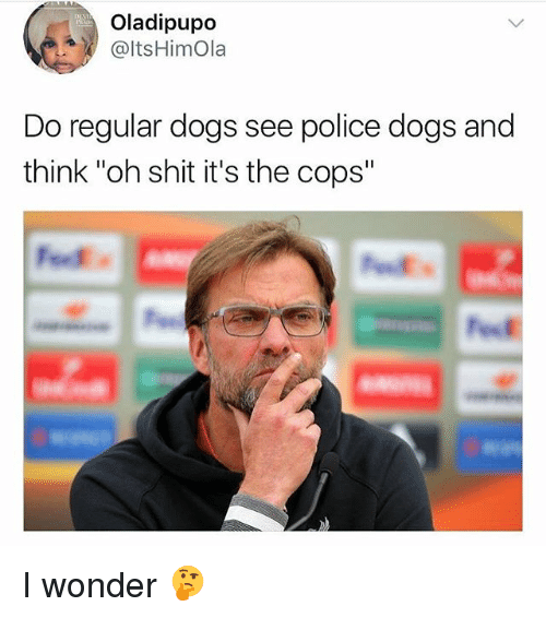 """Dogs, Police, and Shit: Oladipupo  @ItsHimola  Do regular dogs see police dogs and  think """"oh shit it's the cops"""" I wonder 🤔"""