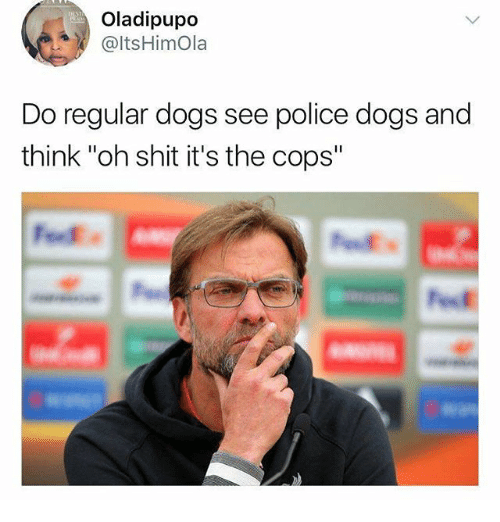 """Dogs, Funny, and Police: Oladipupo  @ltsHimOla  Do regular dogs see police dogs and  think """"oh shit it's the cops"""""""