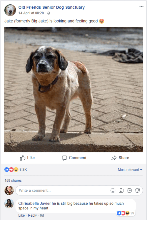 old friends: Old Friends Senior Dog Sanctuary  14 April at 08:20 .  Jake (formerly Big Jake) is looking and feeling good  Like  Comment  Share  Most relevant  159 shares  Write a comment..  Chrisabella Javier he is still big because he takes up so much  space in my heart  Like Reply -6d  0599