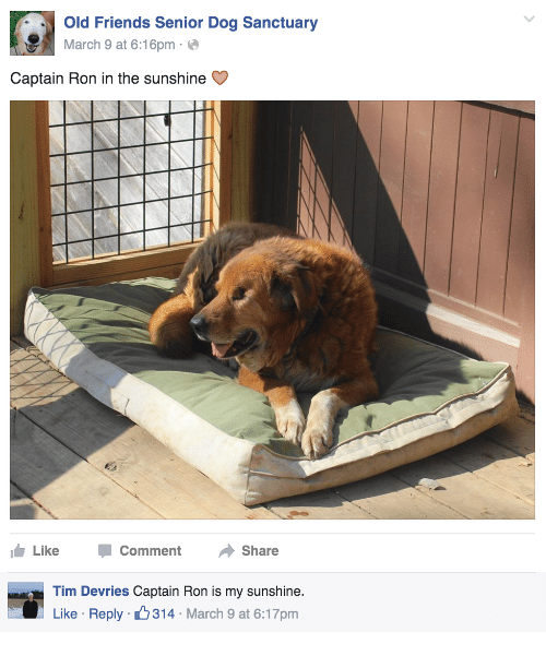 old friends: Old Friends Senior Dog Sanctuary  March 9 at 6:16pme  Captain Ron in the sunshine C  Like -Comment Share   Tim Devries Captain Ron is my sunshine.  Like Reply 314 March 9 at 6:17pm