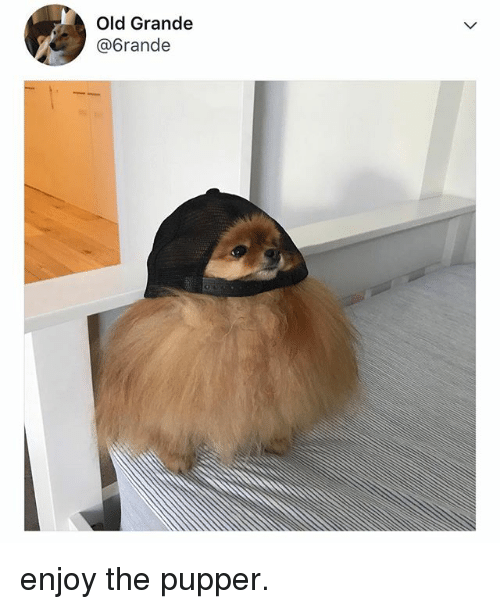 Relatable, Old, and Pupper: Old Grande  @6rande enjoy the pupper.