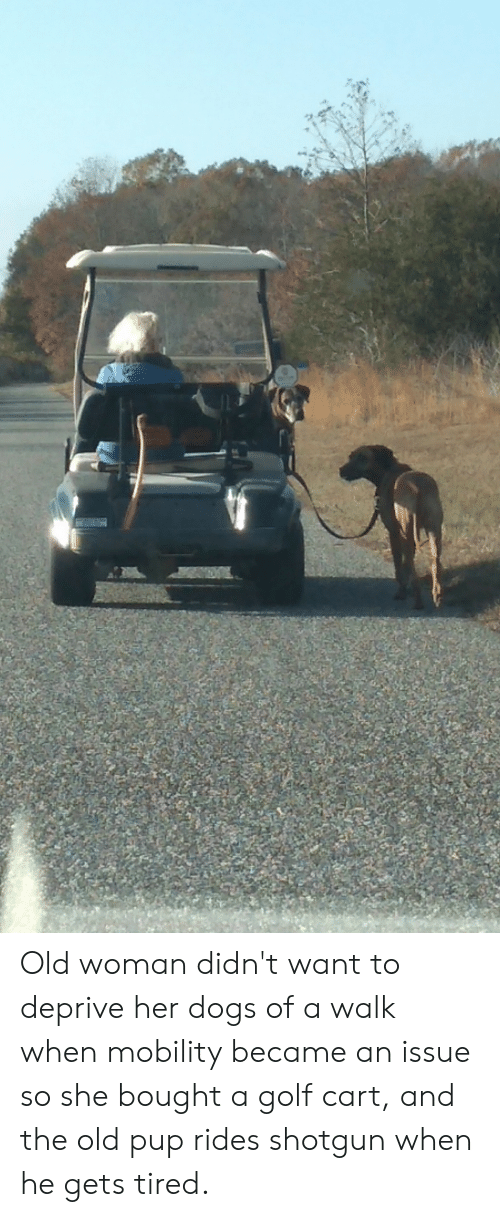 golf cart: Old woman didn't want to deprive her dogs of a walk when mobility became an issue so she bought a golf cart, and the old pup rides shotgun when he gets tired.