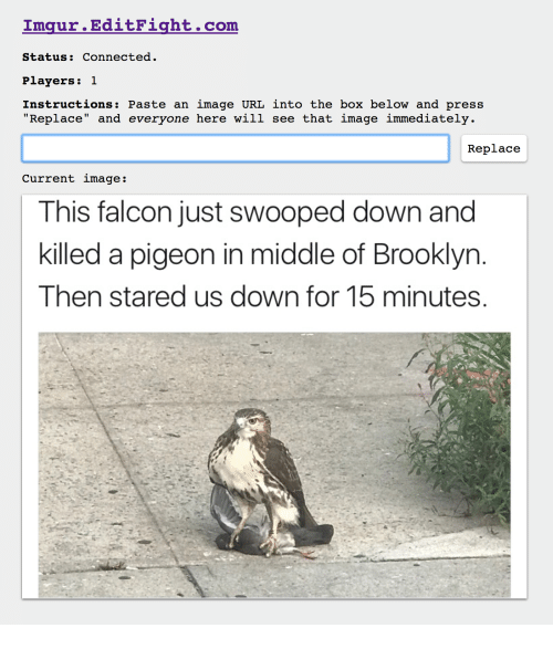 """falcone: Om  Status: Connected  Players: 1  Instructions: Paste an image URL into the box below and press  """"Replace"""" and everyone here will see that image immediately  Repla  ce  Current image:  This falcon just swooped down and  killed a pigeon in middle of Brooklyn  Then stared us down for 15 minutes"""