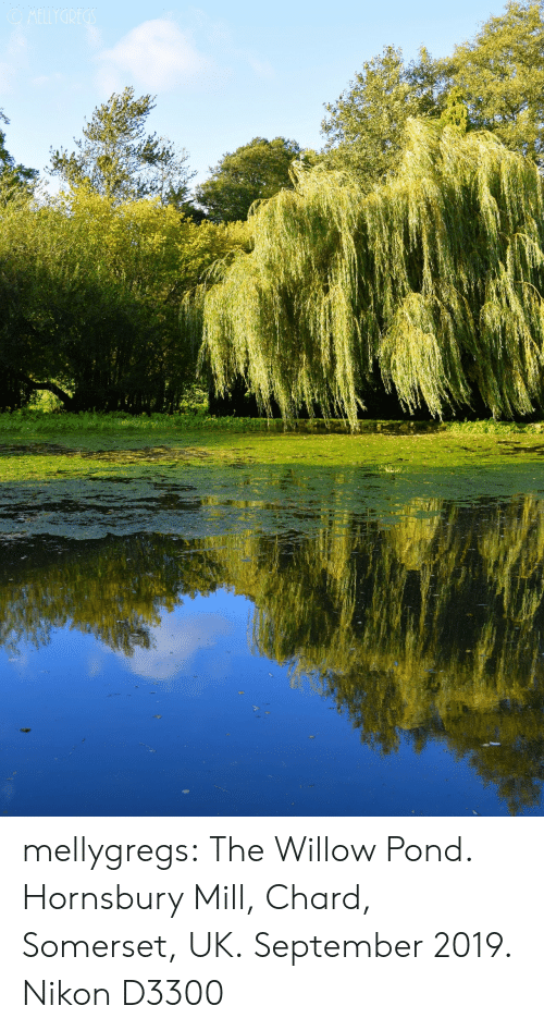 Pond: OMELLYGREGS mellygregs: The Willow Pond. Hornsbury Mill, Chard, Somerset, UK. September 2019. Nikon D3300