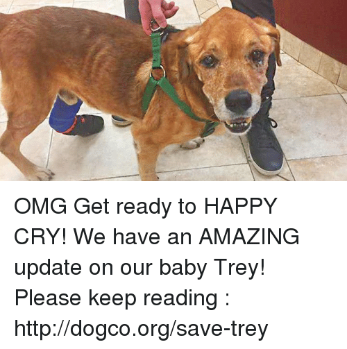 happy crying: OMG Get ready to HAPPY CRY! We have an AMAZING update on our baby Trey! Please keep reading : http://dogco.org/save-trey