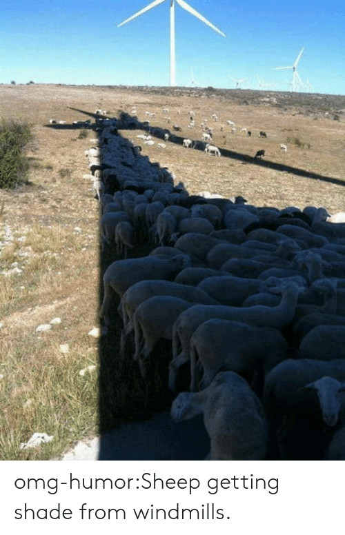 windmills: omg-humor:Sheep getting shade from windmills.