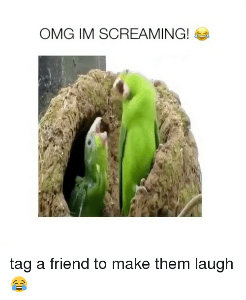 Omg, Girl Memes, and Friend: OMG IM SCREAMING! tag a friend to make them laugh 😂