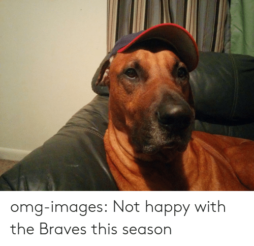 Braves: omg-images:  Not happy with the Braves this season