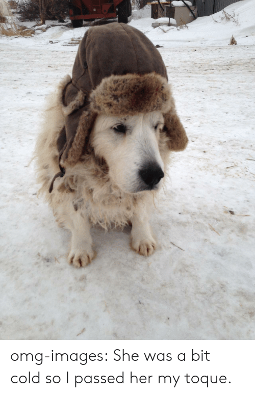 toque: omg-images:  She was a bit cold so I passed her my toque.