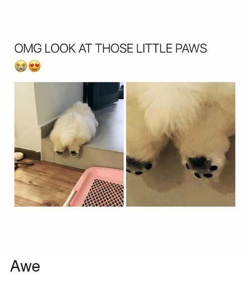 aweful: OMG LOOK AT THOSE LITTLE PAWS Awe