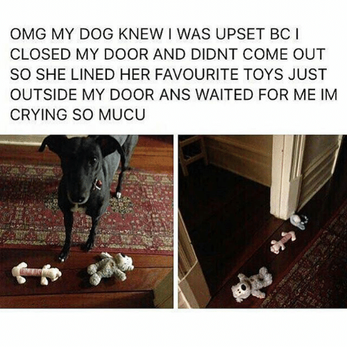 Crying, Memes, and Omg: OMG MY DOG KNEW I WAS UPSET BC I  CLOSED MY DOOR AND DIDNT COME OUT  SO SHE LINED HER FAVOURITE TOYS JUST  OUTSIDE MY DOOR ANS WAITED FOR ME IM  CRYING SO MUCU