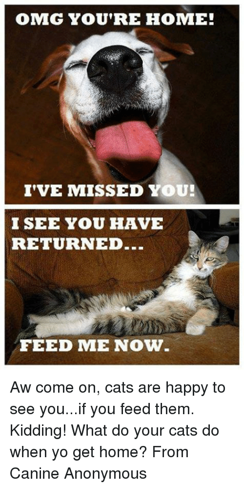 Cats, Memes, and Omg: OMG YOU'RE HOME!  I'VE MISSED YOU!  I SEE YOU HAVE  RETURNED.  FEED ME NOW Aw come on, cats are happy to see you...if you feed them. Kidding!  What do your cats do when yo get home? From Canine Anonymous