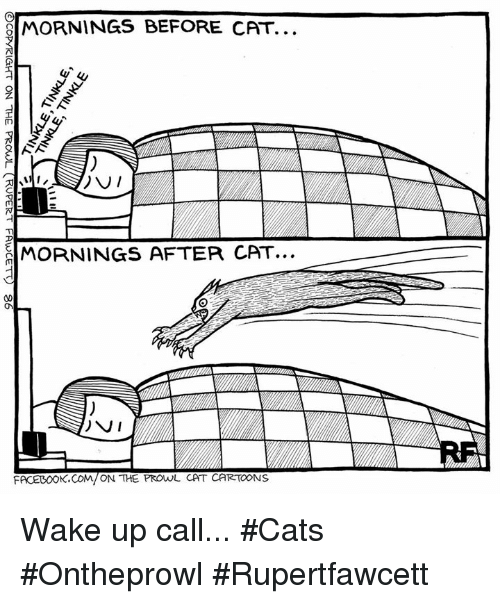 Cats, Facebook, and Memes: OMORNINGS BEFORE CAT.  DV  MORNINGS AFTER CAT...  FACEBOOK.COM/ON THE PROwL CAT CARTOONS Wake up call... #Cats #Ontheprowl #Rupertfawcett