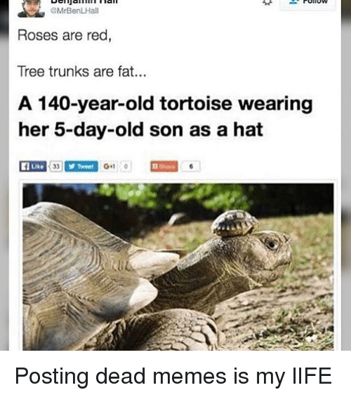 Memes, Trunks, and Rose: OMrBenLHall  Roses are red  Tree trunks are fat...  A 140-year-old tortoise wearing  her 5-day-old son as a hat  Y Tweet  G+1  0 Posting dead memes is my lIFE