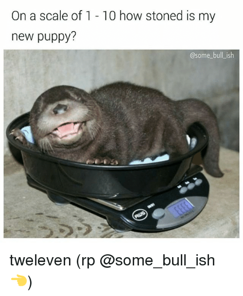 Memes, Puppy, and 🤖: On a scale of 1 - 10 how stoned is my  new puppy?  @some bull_ish tweleven (rp @some_bull_ish 👈)