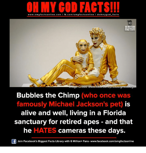 Chimp: ON MY GOD FACTS!!!  www.om g facts on  ne.COm  fb.com/om facts on  I Goh my god-facts  OHMYCOD  FACTS!!  redit www.fl  hotostemed  Bubbles the Chimp (who once was  famously Michael Jackson's pet) is  alive and well, living in a Florida  sanctuary for retired apes and that  he HATES cameras these days.  Join Facebook's Biggest Facts Library with 6 Million+ Fans- www.facebook.com/omgfactsonline