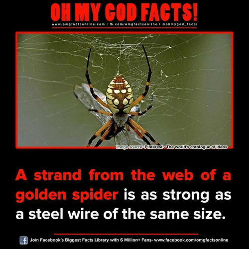ohms: ON MY GOD FACTS!  www.omg facts online.com I fb.com  facts on  a ohm god facts  mage source PinterestoThe World's Gatalogueofideas  A strand from the web of a  golden spider is as strong as  a steel wire of the same size.  Of Join Facebook's Biggest Facts Library with 6 Million+ Fans- www.facebook.com/omgfactsonline
