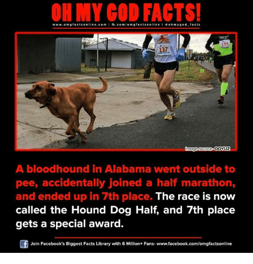 Memes, The Hound, and Alabama: ON MY GOD FACTS!  www.omg facts online.com I fb.com/o mgfacts online I a ohm y god facts  137  mage Source  OOYUZ  A bloodhound in Alabama went outside to  pee, accidentally joined a half marathon,  and ended up in 7th place. The race is now  called the Hound Dog Half, and 7th place  gets a special award.  Join Facebook's Biggest Facts Library with 6 Million+ Fans- www.facebook.com/omgfactsonline