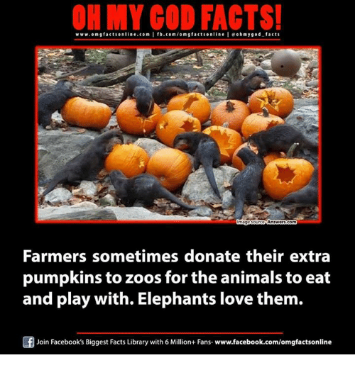 Donat: ON MY GOD FACTS!  www.omg facts online.com I fb.com/om g facts online leoh my god facts  Answers com  mage ours  Farmers sometimes donate their extra  pumpkins to zoos for the animals to eat  and play with. Elephants love them.  Join Facebook's Biggest Facts Library with 6 Million+ Fans- www.facebook.com/omgfactsonline