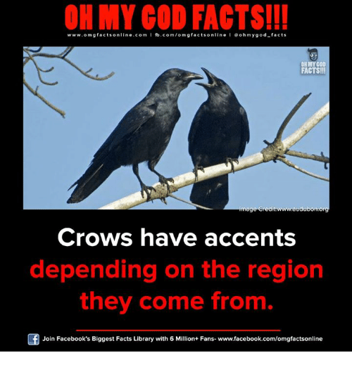 The Region: ON MY GOD FACTS!!!  www.omg facts online.com I fb.com/om gfacts online l ao hmygod-facts  FACTS!!!  mage credit www.audu  Crows have accents  depending on the region  they come from  Join Facebook's Biggest Facts Library with 6 Million+ Fans- www.facebook.com/omgfactsonline