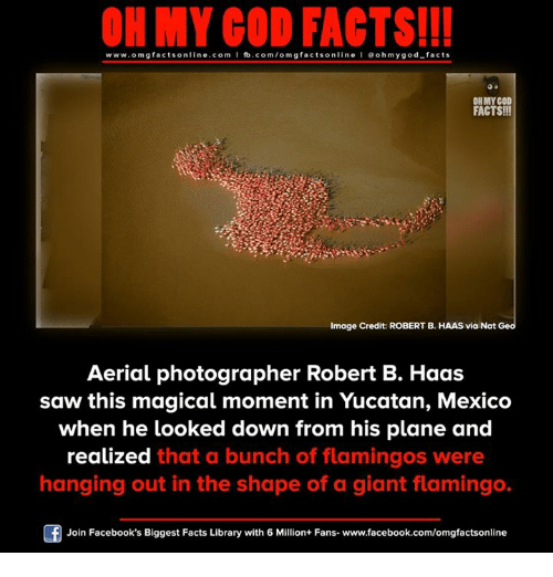 Facebook, Facts, and God: ON MY GOD FACTS!!!  www.omg facts online.com I fb.com/omg facts online I Goh my god-facts  OHMYCOD  FACTS!!!  mage Credit: ROBERT B. HAAS via Nat Geo  Aerial photographer Robert B. Haas  saw this magical moment in Yucatan, Mexico  when he looked down from his plane and  realized that a bunch of flamingos were  hanging out in the shape of a giant flamingo.  Join Facebook's Biggest Facts Library with 6 Million+ Fans- www.facebook.com/omgfactsonline