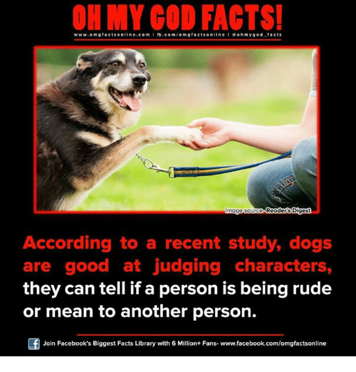ohms: ON MY GOD FACTS!  www.omg facts online.com I fb.com/  online I a ohm y god facts  Readers Digest  mage Source  According to a recent study, dogs  are good at judging characters,  they can tell if a person is being rude  or mean to another person.  F Join Facebook's Biggest Facts Library with 6 Million+ Fans- www.facebook.com/omgfactsonline