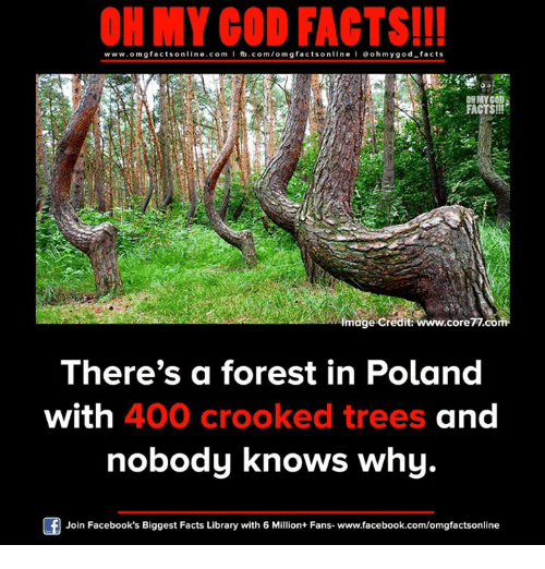 Facebook, Facts, and God: ON MY GOD FACTS!!!  www.omg online.com I fb.com/omg facts online I Goh my god-facts  facts mage credit: www.core77.com.  There's a forest in Poland  with 400 crooked trees and  nobody knows why  Join Facebook's Biggest Facts Library with 6 Million+ Fans- www.facebook.com/omgfactsonline
