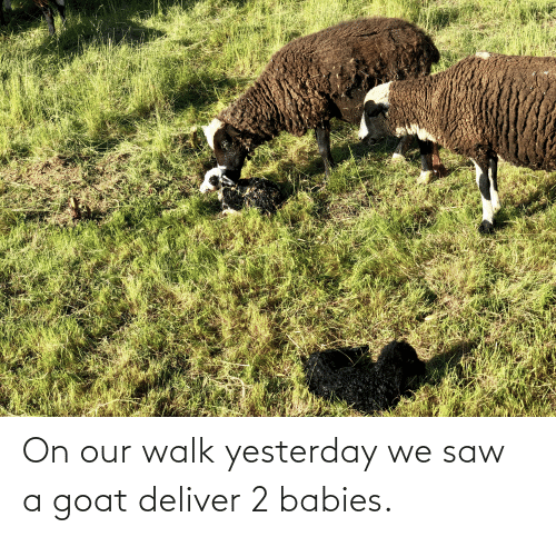 deliver: On our walk yesterday we saw a goat deliver 2 babies.