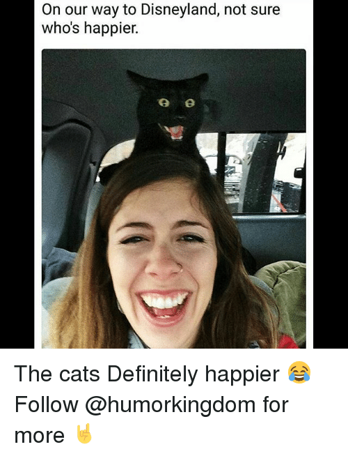 Cats, Definitely, and Disneyland: On our way to Disneyland, not sure  who's happier. The cats Definitely happier 😂 Follow @humorkingdom for more 🤘