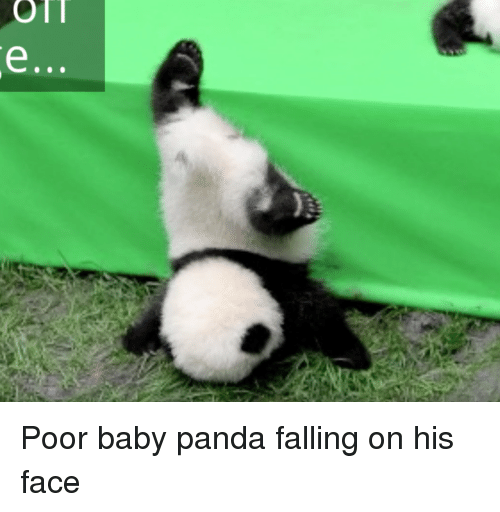 Funny Baby Panda Memes of 2016 on SIZZLE | Baby, It's Cold ...