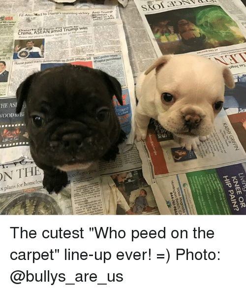"Trump Winning: ON THE  to Bl  Fil Ams react to Trump stunning victory Anti T  China  ASEAN am  Trump win  House panel starts deliberation on death penalty  bil VACC pushesf  pass  colleges x for homeless  plans The cutest ""Who peed on the carpet"" line-up ever!    =)  Photo: @bullys_are_us"