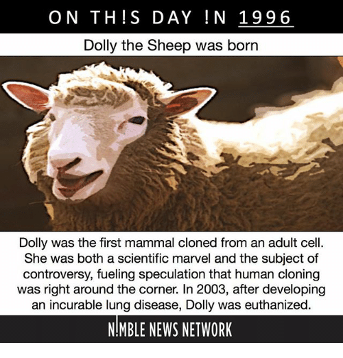 cloning of dolly the sheep and the controversy of human cloning