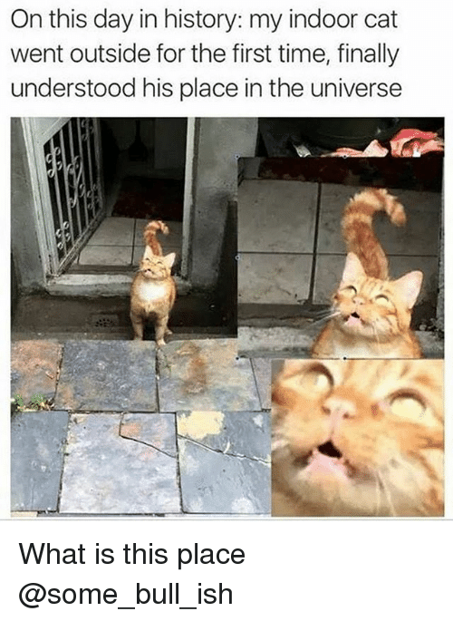Funny, History, and Time: On this day in history: my indoor cat  went outside for the first time, finally  understood his place in the universe What is this place @some_bull_ish