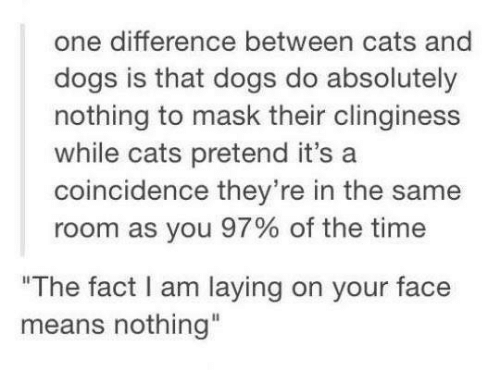 """Clingie: one difference between cats and  dogs is that dogs do absolutely  nothing to mask their clinginess  while cats pretend it's a  coincidence they're in the same  room as you 97% of the time  """"The fact I am laying on your face  means nothing"""""""