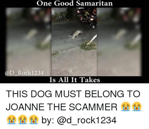 Rockies: One Good Samaritan  @D Rocki 234  Is All It Takes THIS DOG MUST BELONG TO JOANNE THE SCAMMER 😭😭😭😭😭 by: @d_rock1234
