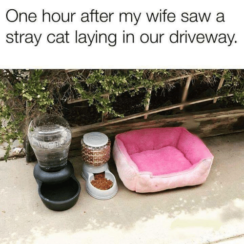 driveway: One hour after my wife saw a  stray cat laying in our driveway