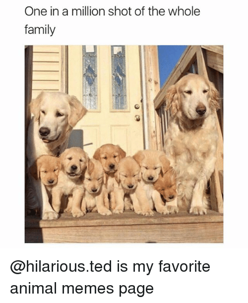 Family, Funny, and Memes: One in a million shot of the whole  family @hilarious.ted is my favorite animal memes page