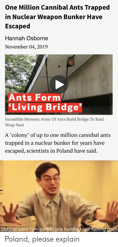 """wasp nest: One Million Cannibal Ants Trapped  in Nuclear Weapon Bunker Have  Escaped  Hannah Osborne  November 04, 2019  Ants Form  'Living Bridge  Incredible Moment Army Of Ants Build Bridge To Raid  Wasp Nest  A """"colony"""" of up to one million cannibal ants  trapped in a nuclear bunker for years have  escaped, scientists in Poland have said.  mgip.com St went from zero to one hundred teal fucking  quick Poland, please explain"""