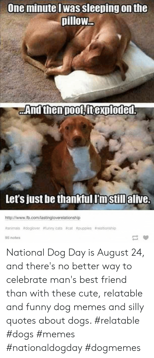 Silly Quotes: One minute Iwas sleeping on the  pillow...  And then poof, itexploded  Let's just be thankful lm still alive.  http://www.fb.com/lastingloverelationship  rarimals #doglover #tunny cats #cat #puppies lrealtionship  95 notes National Dog Day is August 24, and there's no better way to celebrate man's best friend than with these cute, relatable and funny dog memes and silly quotes about dogs.  #relatable #dogs #memes #nationaldogday #dogmemes