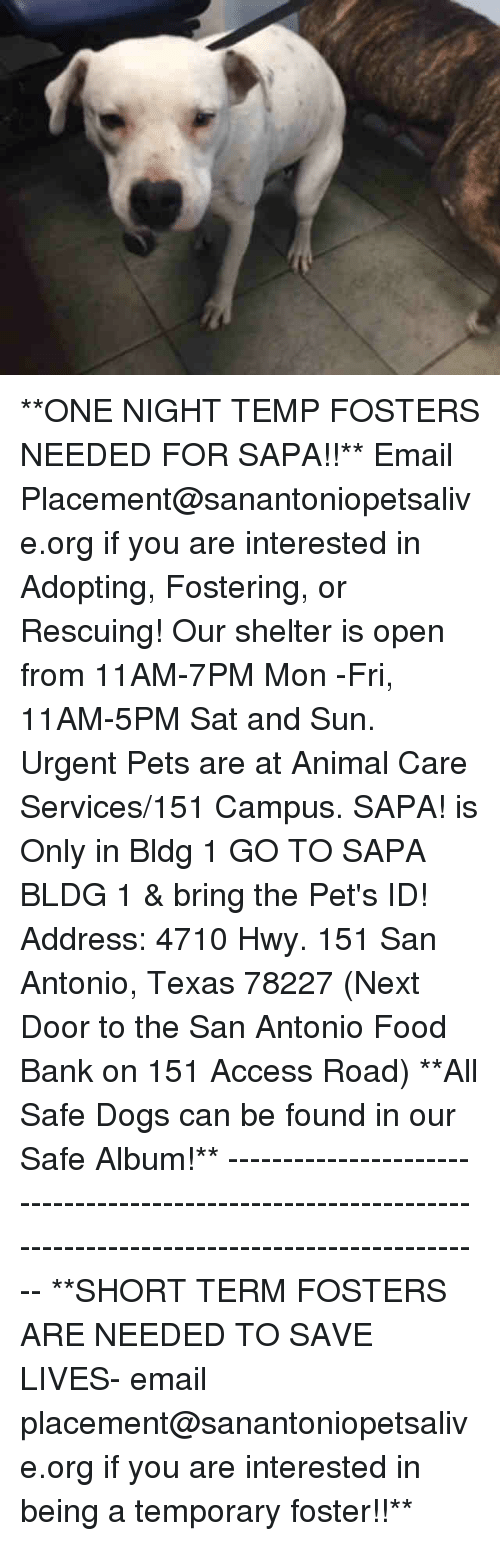 Dogs, Food, and Memes: **ONE NIGHT TEMP FOSTERS NEEDED FOR SAPA!!**  Email Placement@sanantoniopetsalive.org if you are interested in Adopting, Fostering, or Rescuing!  Our shelter is open from 11AM-7PM Mon -Fri, 11AM-5PM Sat and Sun.  Urgent Pets are at Animal Care Services/151 Campus. SAPA! is Only in Bldg 1 GO TO SAPA BLDG 1 & bring the Pet's ID! Address: 4710 Hwy. 151 San Antonio, Texas 78227 (Next Door to the San Antonio Food Bank on 151 Access Road)  **All Safe Dogs can be found in our Safe Album!** ---------------------------------------------------------------------------------------------------------- **SHORT TERM FOSTERS ARE NEEDED TO SAVE LIVES- email placement@sanantoniopetsalive.org if you are interested in being a temporary foster!!**